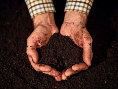 Quality soil in male gardener hands, cultivated dirt ground for organic gardening and agriculture